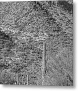 Maricopa Hills Metal Print