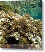 Marine Algae Metal Print
