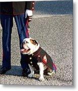 Marine Bull Dog Metal Print by Kenneth Summers