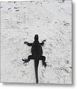 Marine Iguanas Galapagos Metal Print