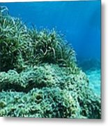 Marine Plants Metal Print by Science Photo Library