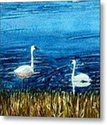 Marion Lake Swans Metal Print