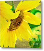 Mark Twain's Sunflowers Metal Print