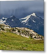 Marmot Meadow Metal Print