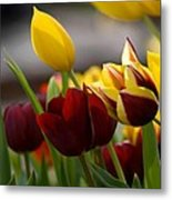 Maroon And Gold Tulips Metal Print