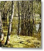 Marsh At Cheadle Lake Metal Print