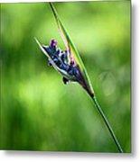 Marsh Flower Metal Print