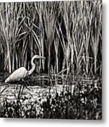 Marsh Hunter Metal Print