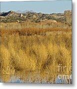 Marsh Lands In Wildlife Refuge Metal Print