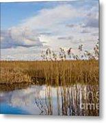 Marsh Reed Metal Print