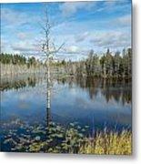 Marsh Reflections Metal Print