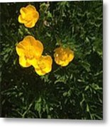 Martha's Flowers Metal Print