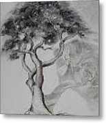 Marula The Provider Metal Print