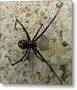 Maryland Black Widow Metal Print