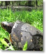 Maryland Spotted Turtle Metal Print