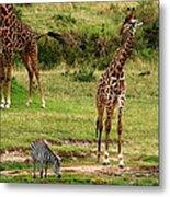 Masai Mara Wildlife Scene Metal Print