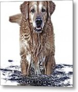 Master Of Wet Elements Metal Print