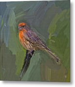 Mating Colors Of The Male Finch Metal Print