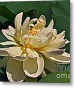 Mature Lotus Flower And Cute Hovering Honeybee Metal Print