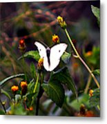 Maui Butterfly Metal Print