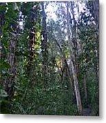 Maui Forest Metal Print