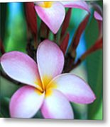 Maui Plumeria Metal Print