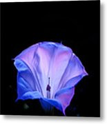 Mauve Blue Black Angels Trumpet Metal Print
