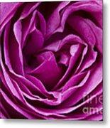 Mauve Rose Petals Metal Print