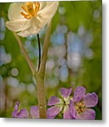 May Apples And Wild Geraniums Metal Print