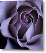 May Dreams Come True - Purple Pink Rose Closeup Flower Photograph Metal Print