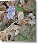 May Flowers Metal Print