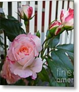 Mayberry Sunshine Metal Print