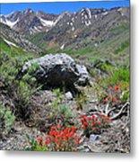 Mcgee Creek Wildflowers Metal Print