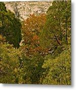 Mckittrick Canyon Trail Metal Print