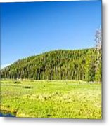 Meadow And Forest Metal Print