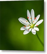 Meadow Candy - Featured 3 Metal Print