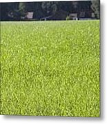 Meadow In City Park Boschveld Arnhem Netherlands Metal Print