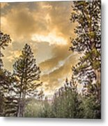 Meadow Sunset Gold Metal Print