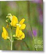 Meadow Vetchling Wild Flower Metal Print