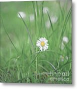 Meadows Of Heaven Metal Print
