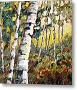 Meandering Woods Metal Print