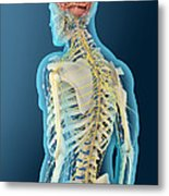 Medical Illustration Of Human Brain Metal Print
