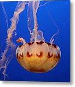 Medusa Jellyfish  Metal Print