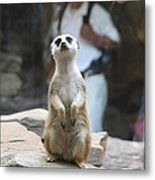 Meerket - National Zoo - 01132 Metal Print by DC Photographer