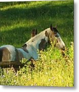 Meet Me At The Fence Metal Print