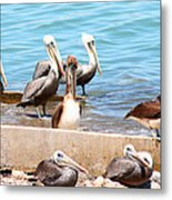 Meeting Of The Board Metal Print