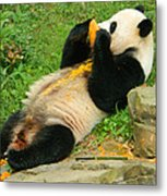 Mei Xiang Chowing On Frozen Treat Metal Print
