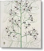 Melia Azedarach From 'phytographie Medicale' By Joseph Roques Metal Print