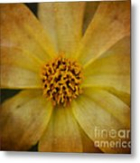Mellow Yellow  2 Metal Print