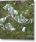 Melting Snow In The Pines Metal Print